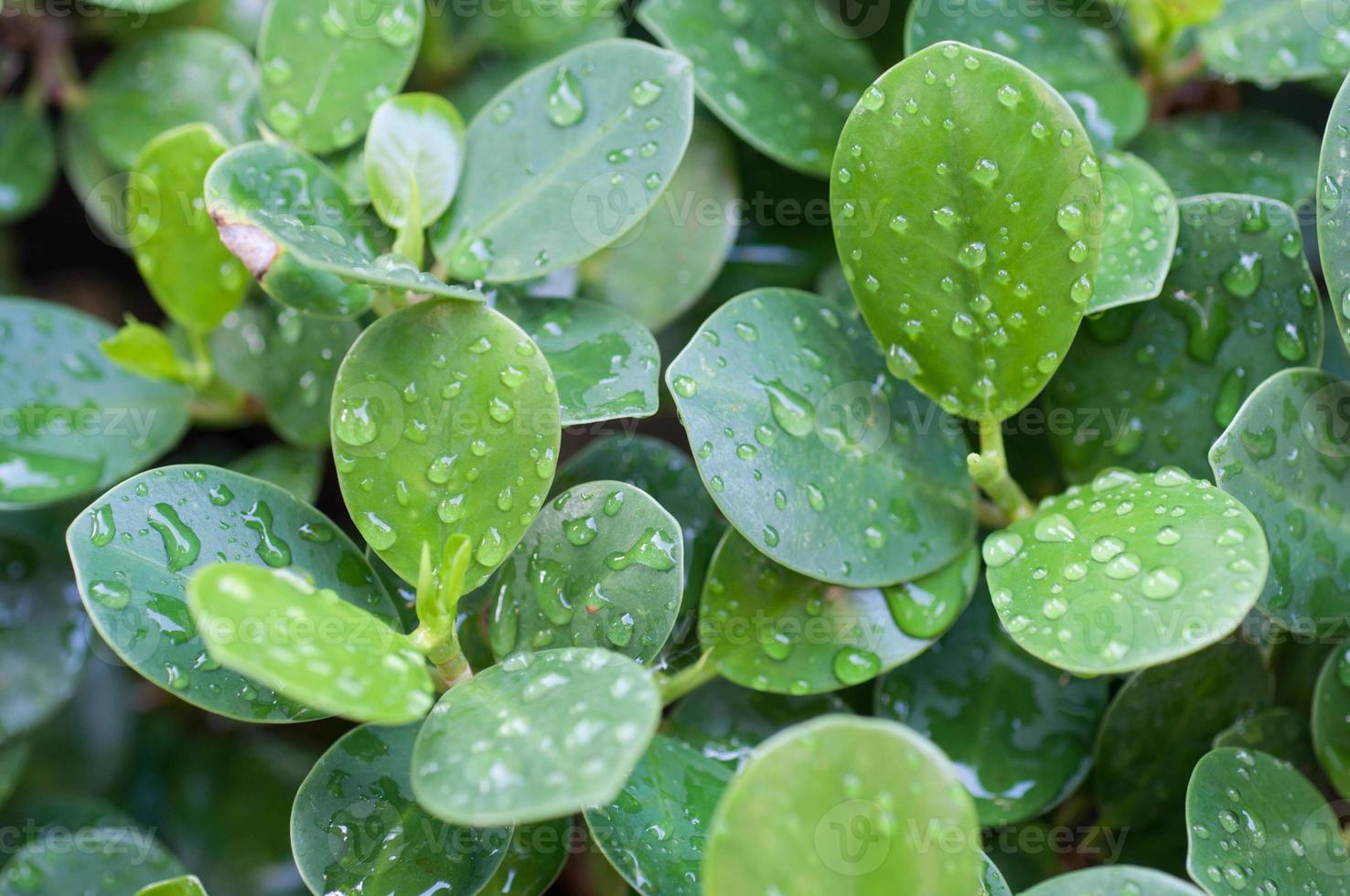 groen blad met waterdruppels foto