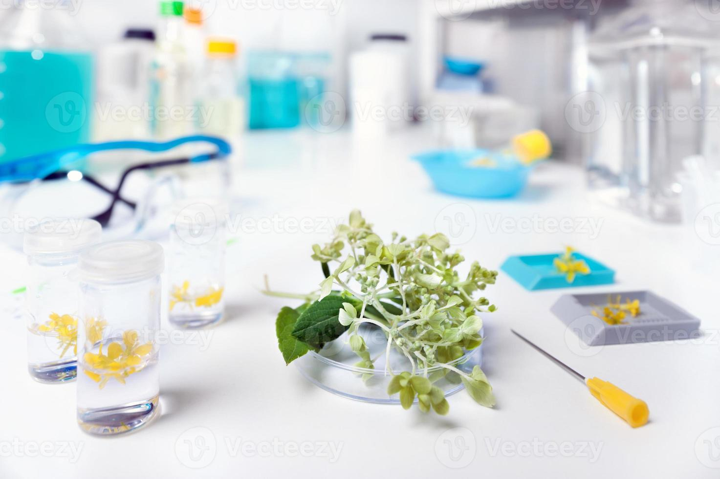 plantenbiologie foto