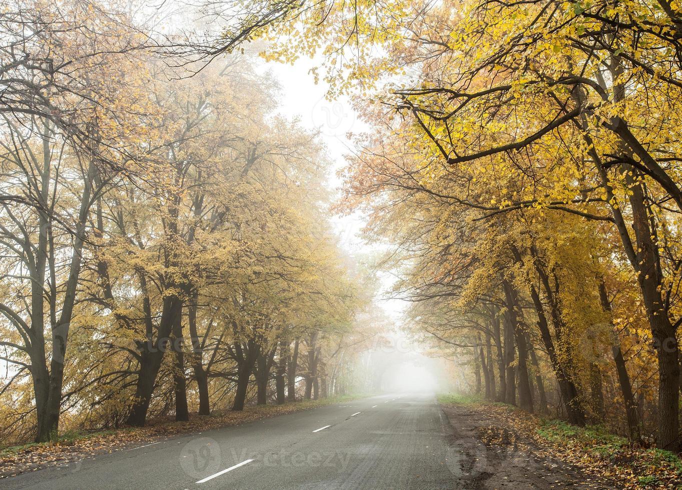 mistige herfstweg. foto
