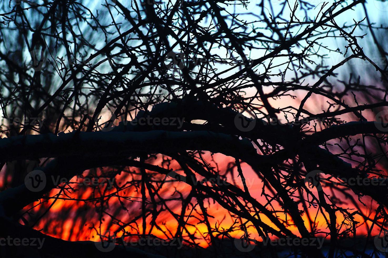 schemering door takken: kleurrijke zonsondergang verlichte boom foto