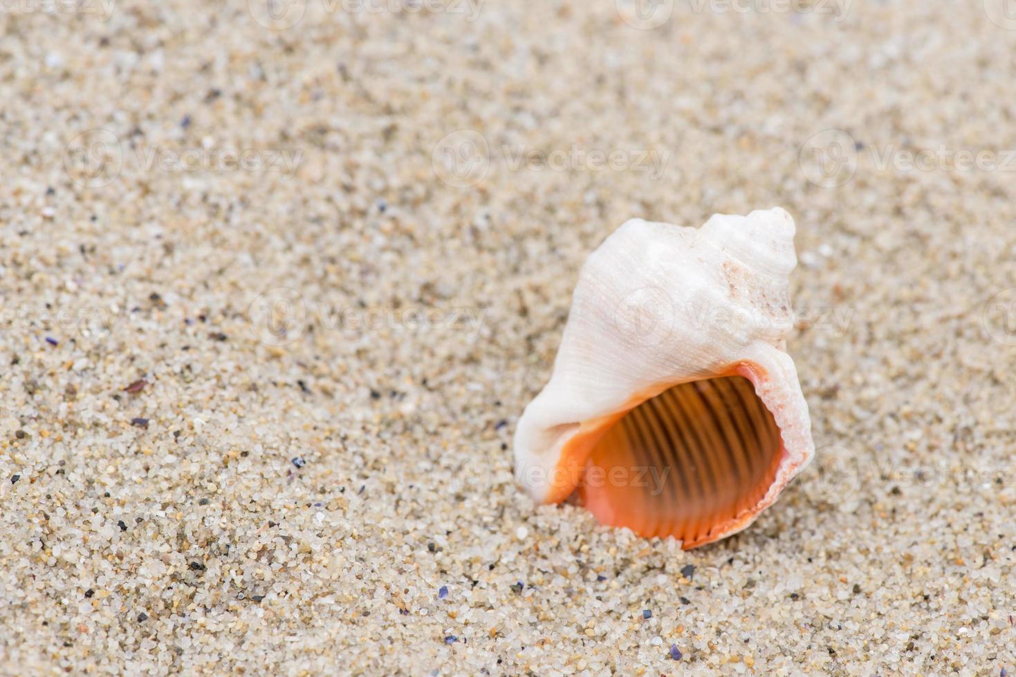 shell op het strand - kopieer ruimte foto