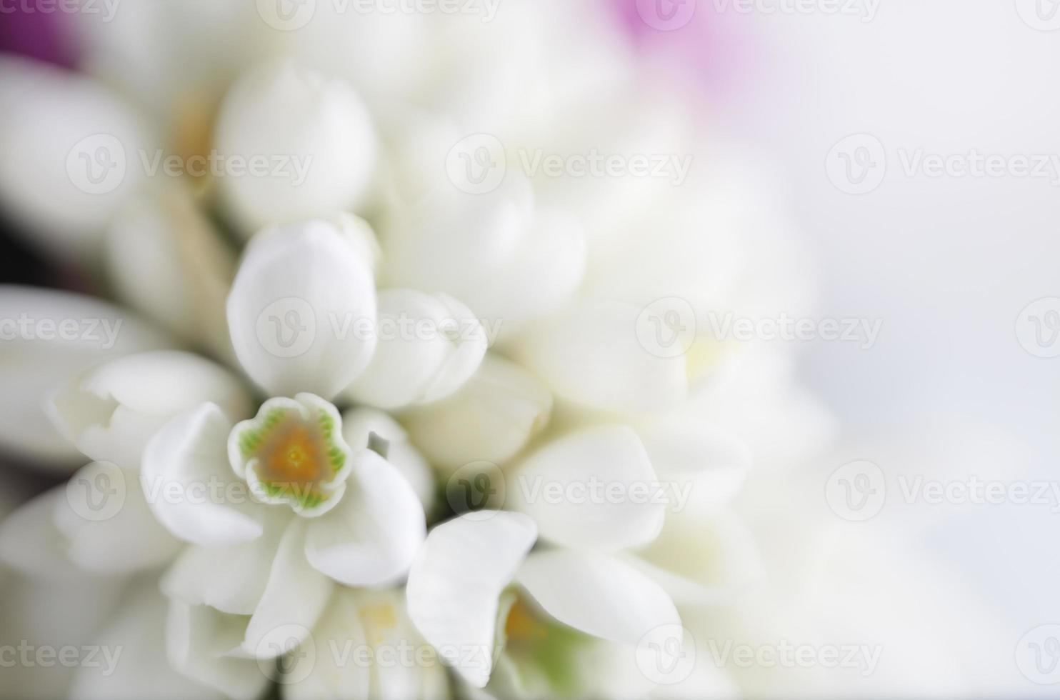 Soft Focus Sea ... bloem achtergrond met kopie ruimte. foto