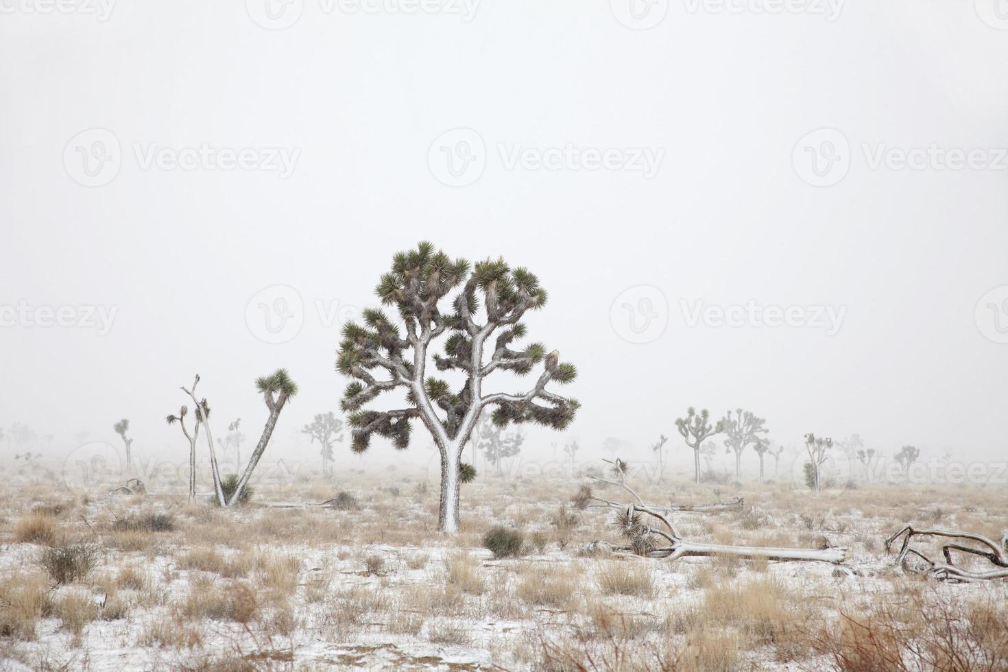 mojave woestijn sneeuwstorm joshua boom nationaal park Californië kopie ruimte foto