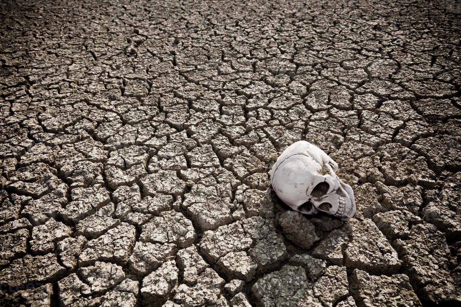 menselijke schedel op een droog land foto