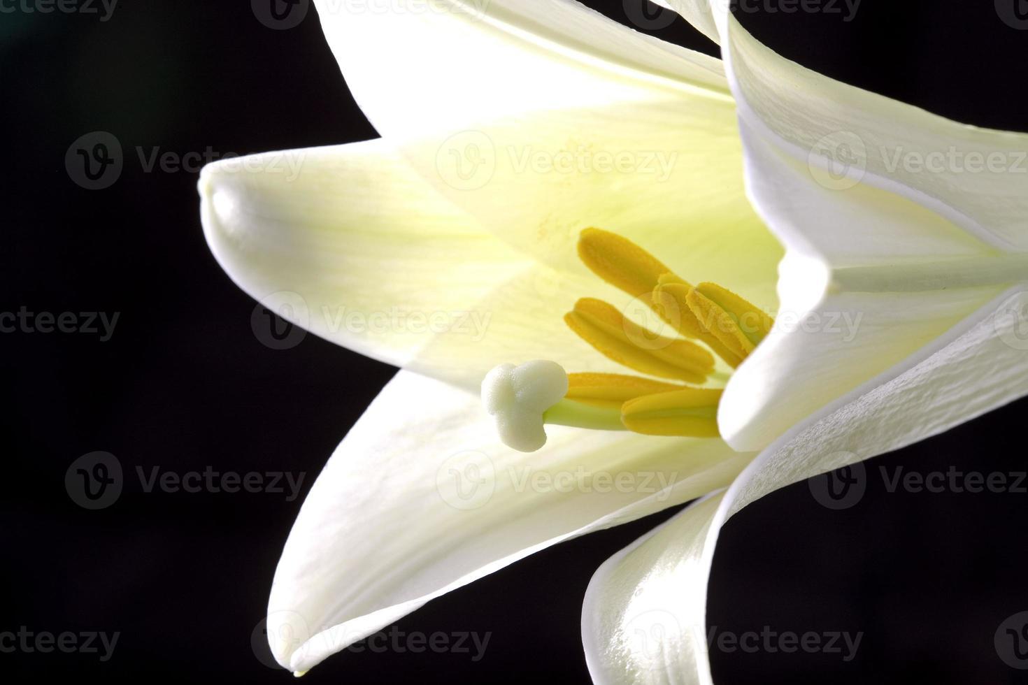 close-up lelie foto