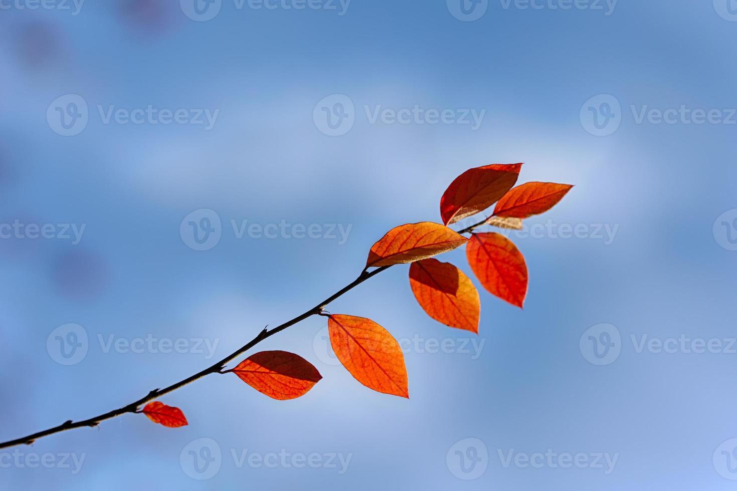 herfst close-up foto