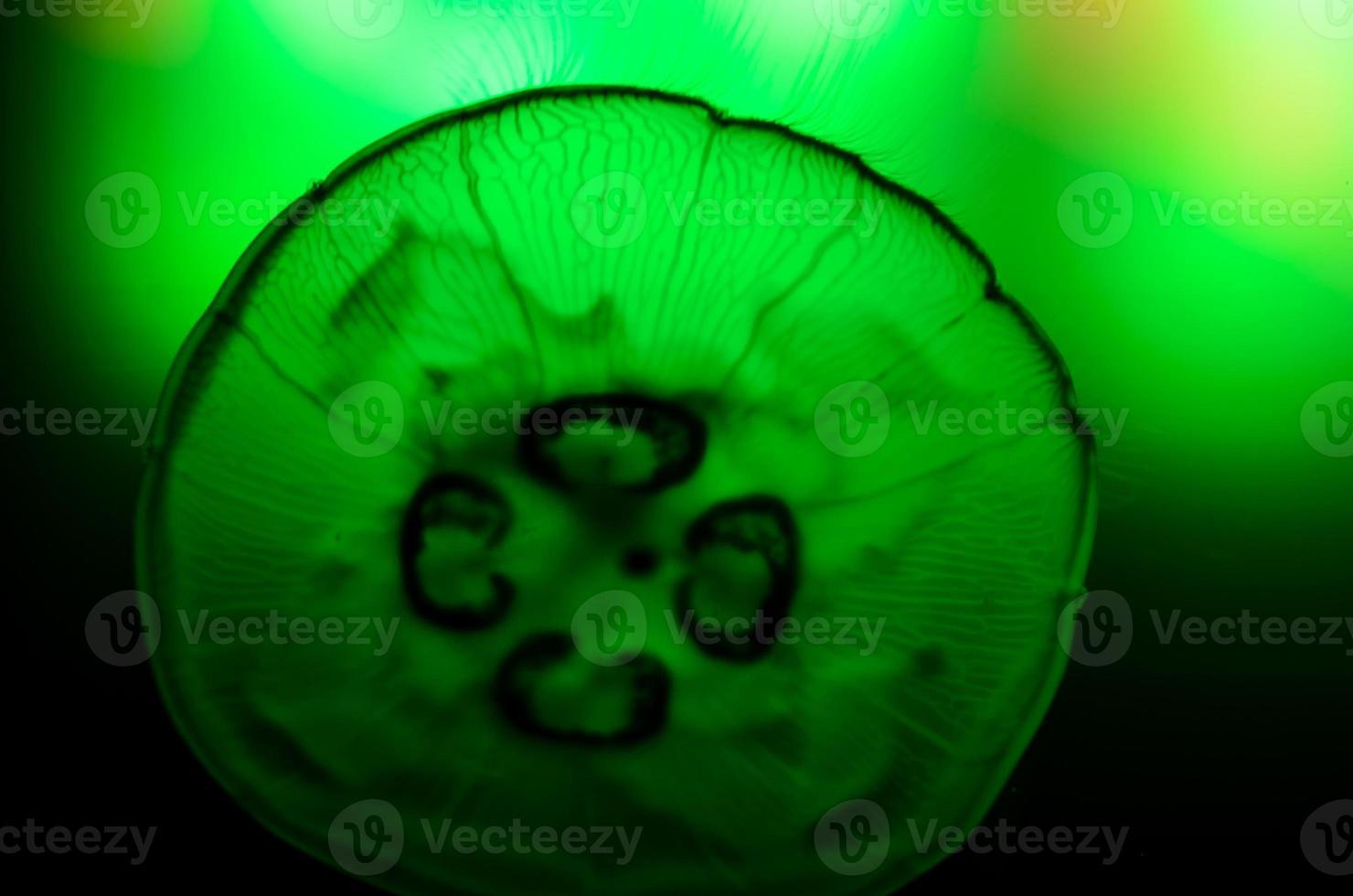 close-up van kwallen foto