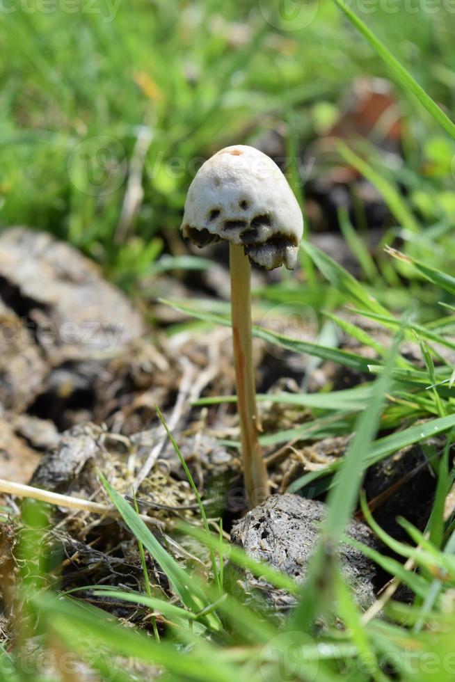 close-up van wilde paddenstoelen foto