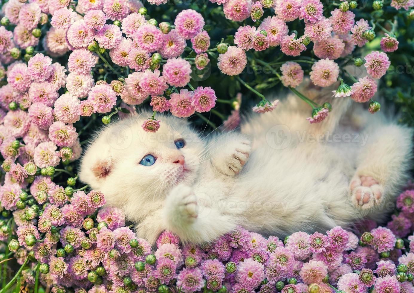 leuk katje ontspannen in bloemen foto