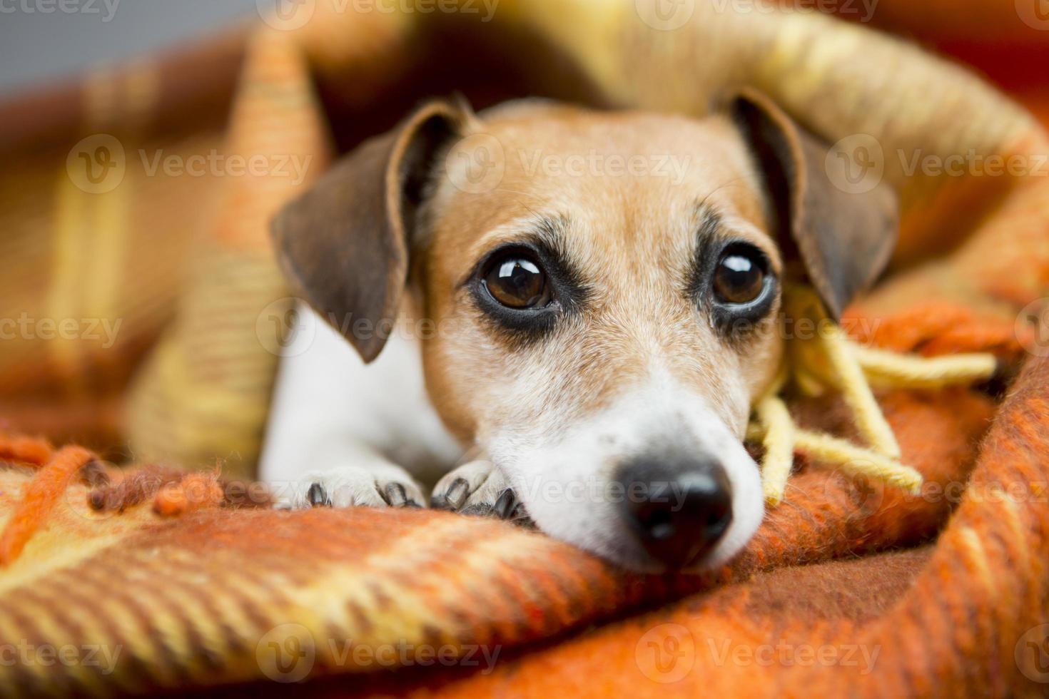 puppy voor ontspanning en comfort foto