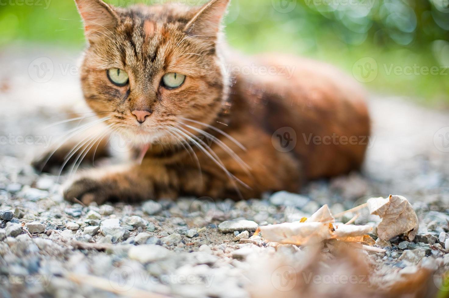 kat in de natuur foto