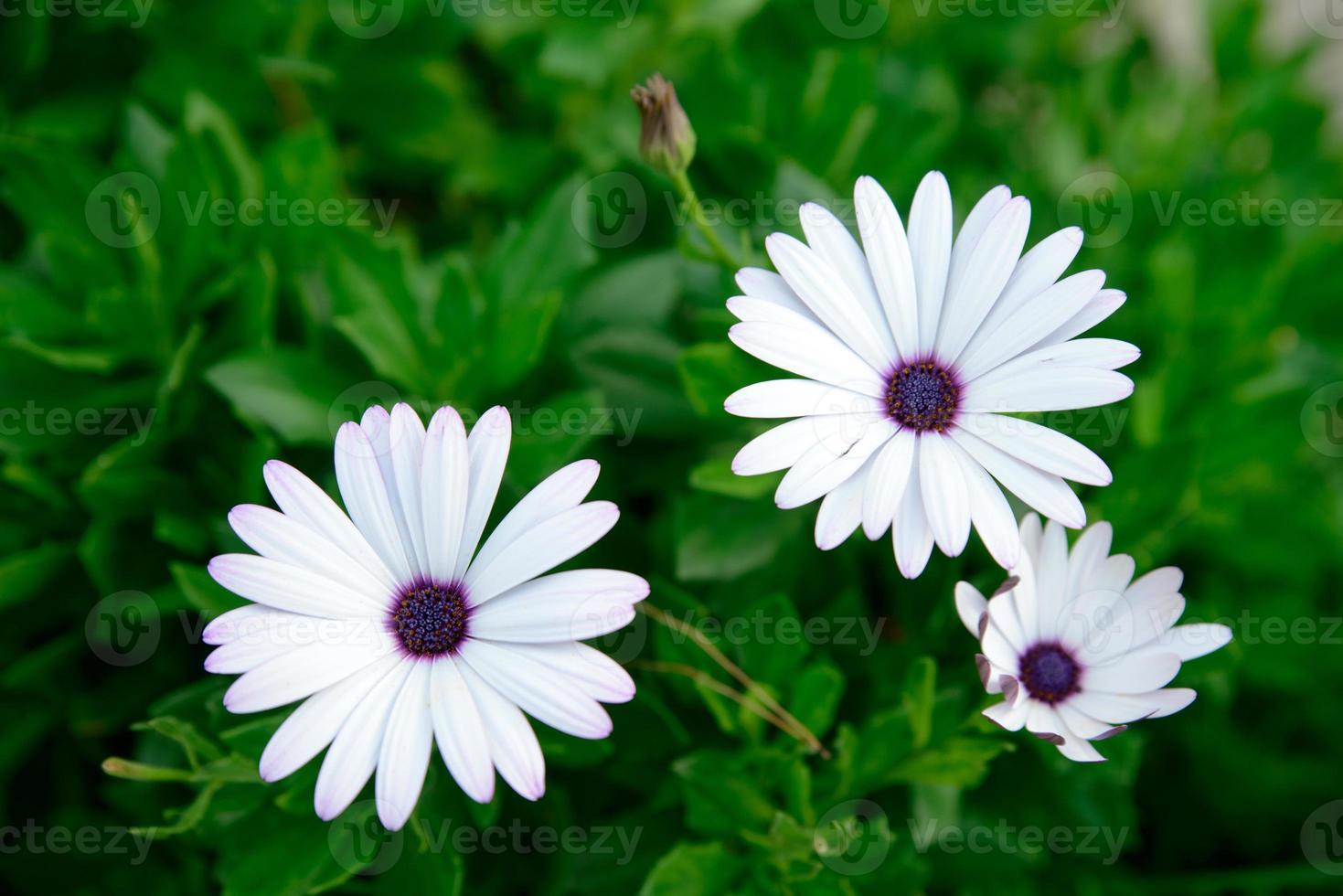 witte bloemen close-up foto