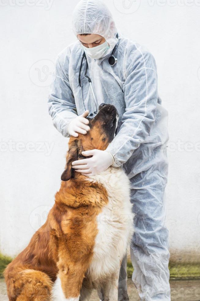 dierenarts inspecteert en controleert een hond. foto