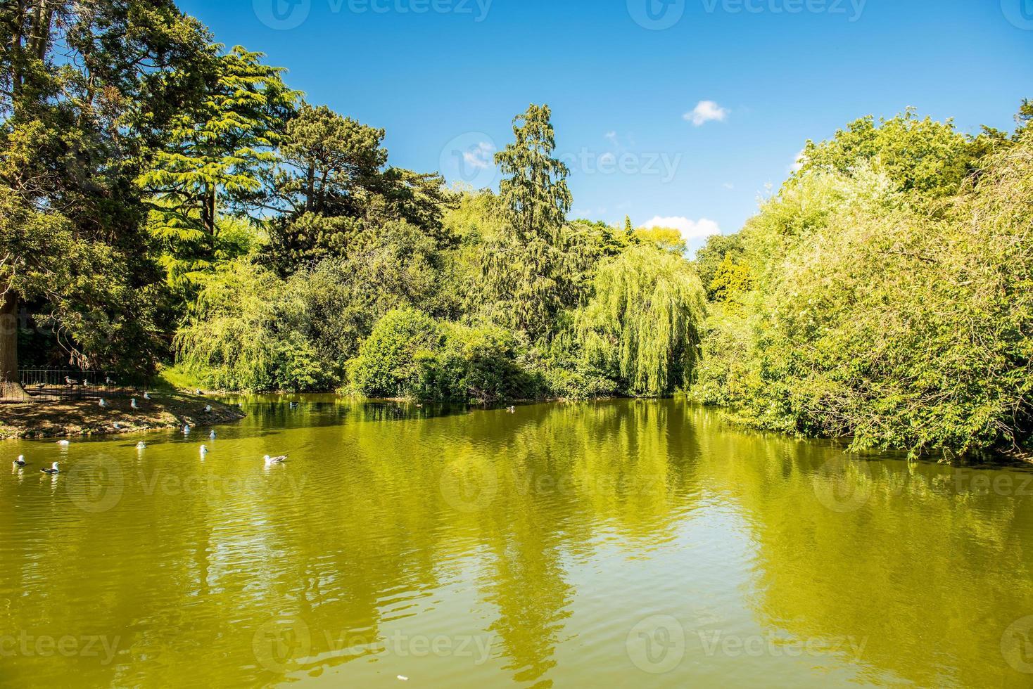groene bomen over meertje foto