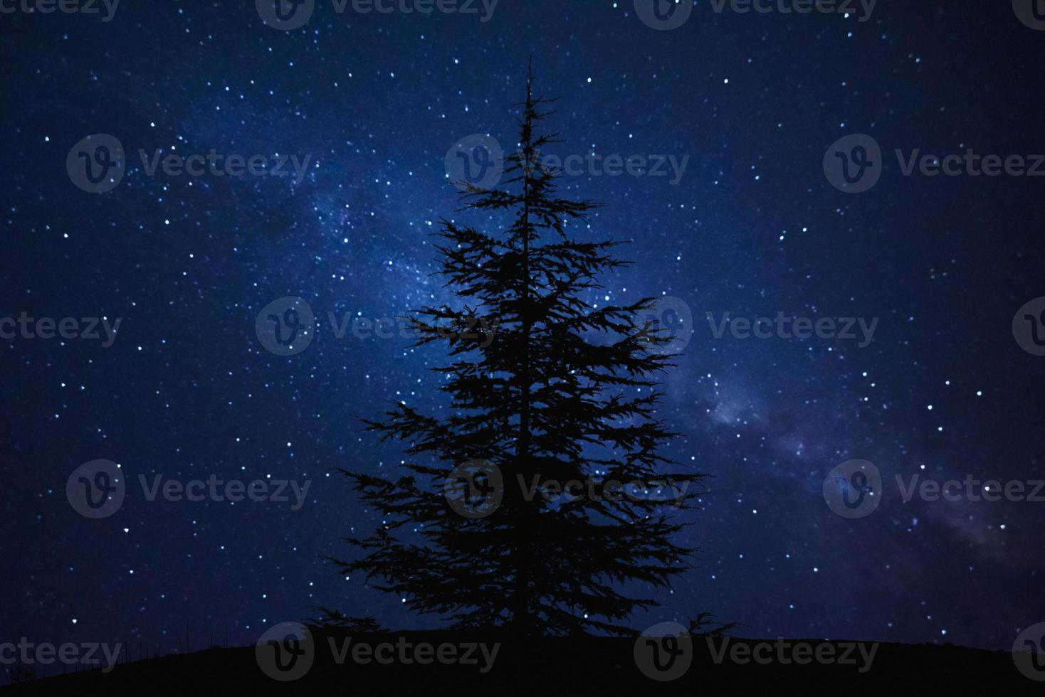 silhouet van pijnboom en Melkweg foto