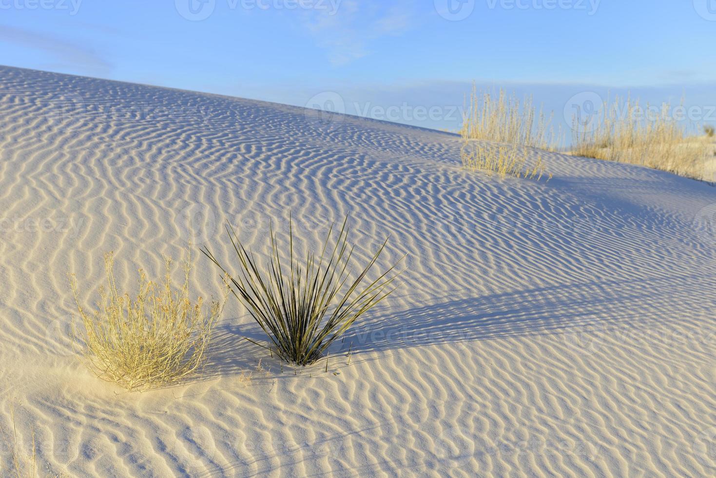patronen in wit zand foto