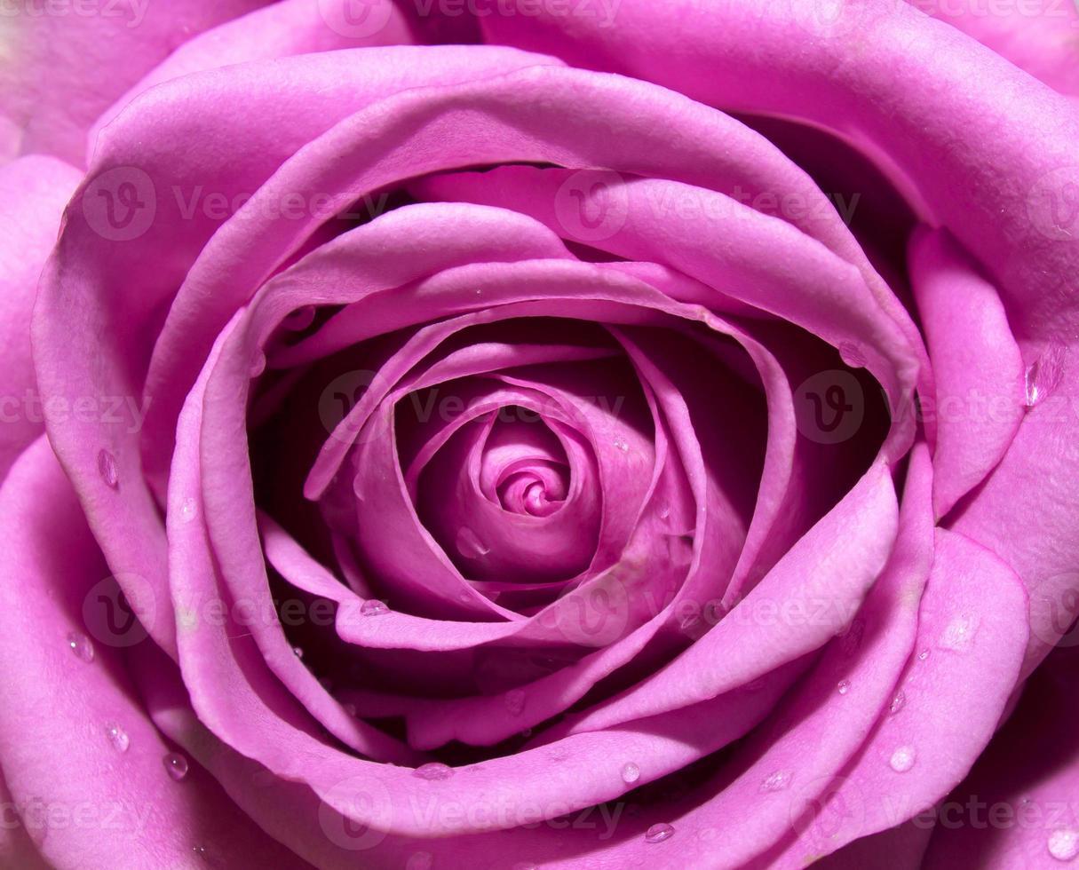 paarse donkerroze achtergrond, abstract bloemen natuurlijk patroon foto