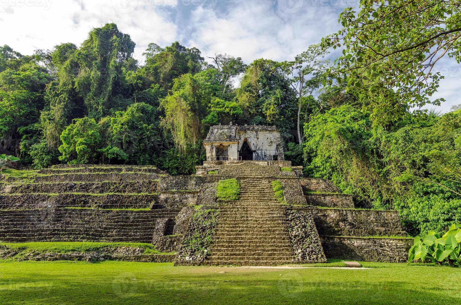 oude tempel en jungle foto