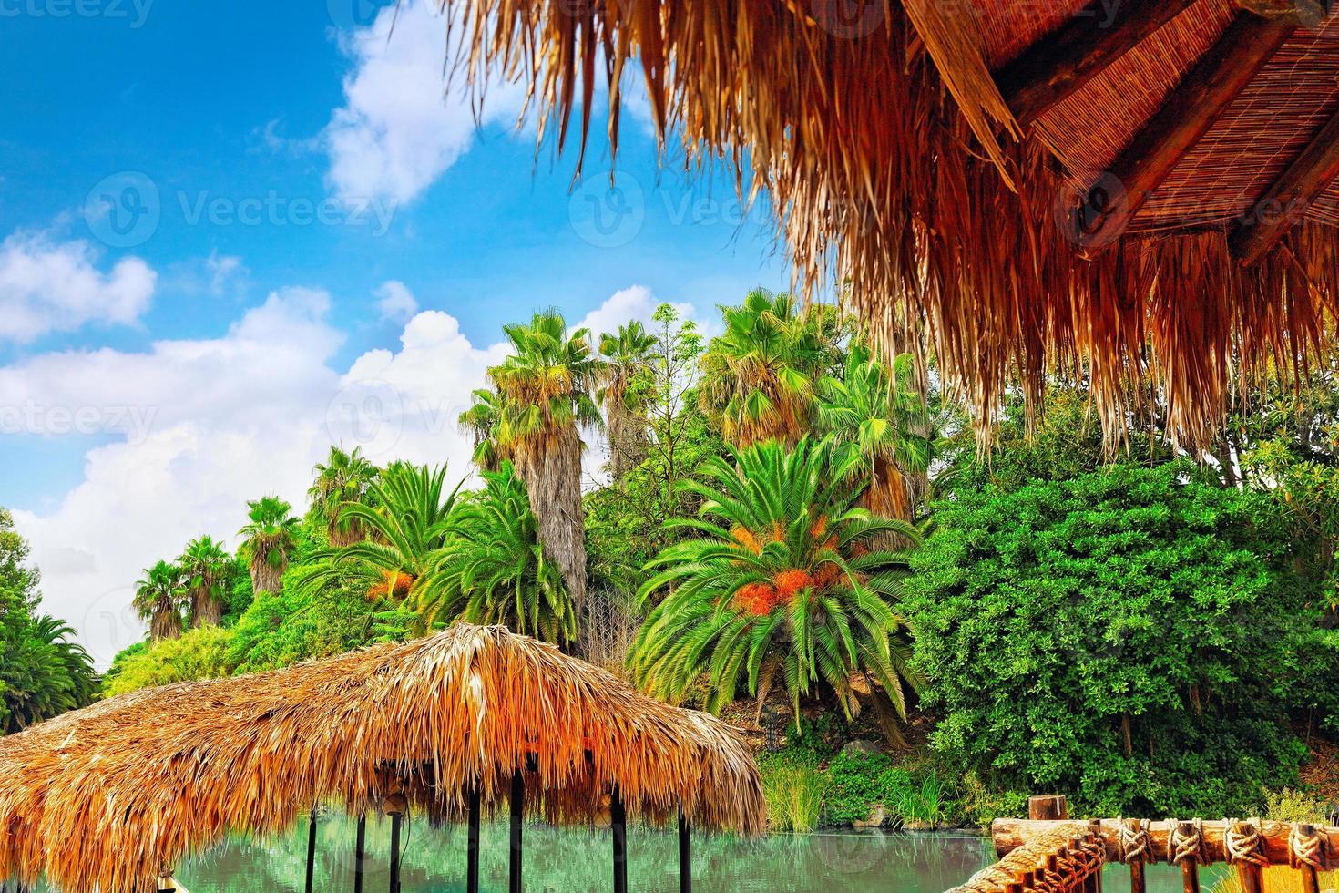 prachtig landschap van vochtige tropische jungle. foto