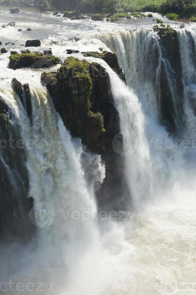 prachtige natuur wild jungle landschap regenwoud iguazu watervallen argentinië foto