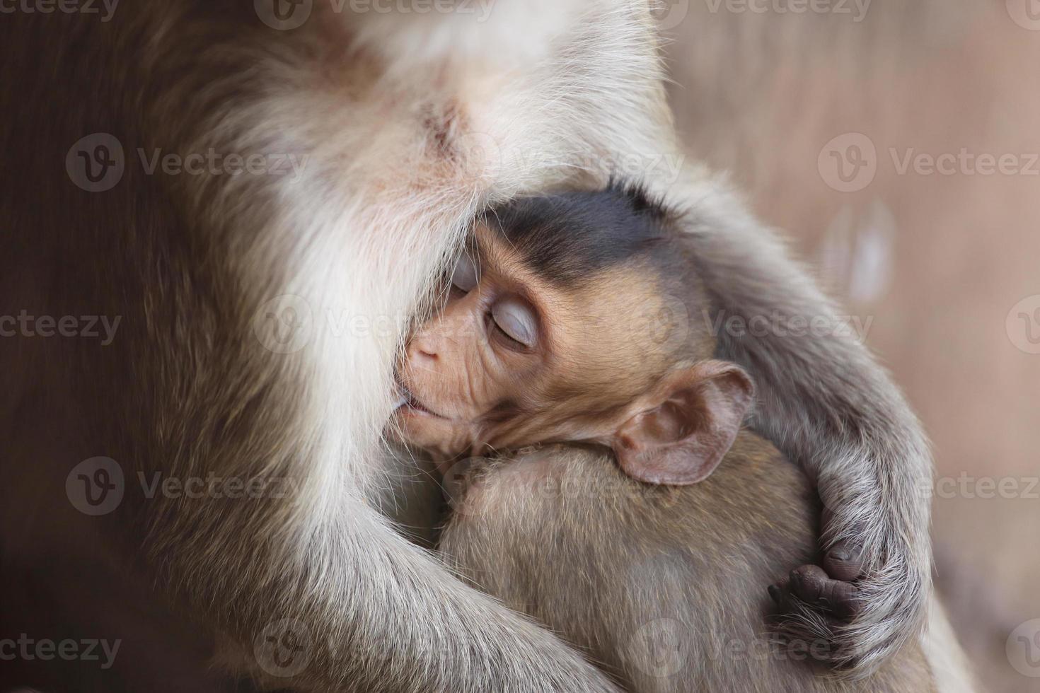 portret van kleine baby makaak foto