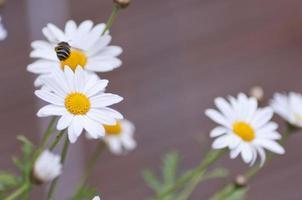 bijen vliegen in een tuin foto