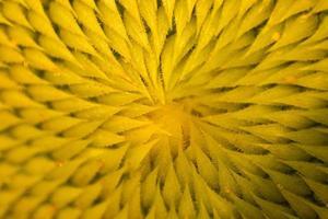 macro zonnebloemen foto