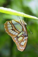 macro vlinder foto