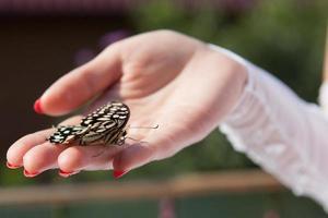 hand van een bruid met een buttefly foto