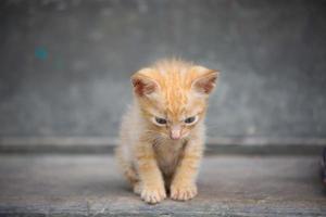 schattige baby kitten. foto