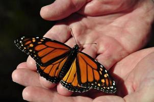 man met ruwe handen met delicate monarchvlinder foto