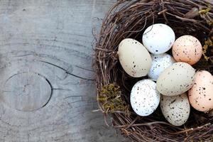 nest met eieren foto