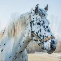 portret van paard foto