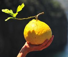 grote citroen in een hand foto