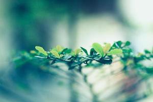 groene folder foto