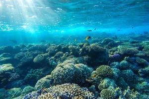 rode zee onderwater koraalrif foto