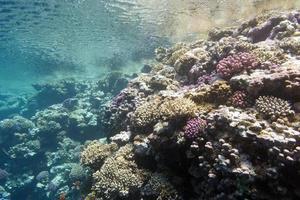 koraalrif onder het wateroppervlak in tropische zee foto
