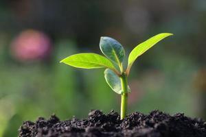 groeiende plant foto