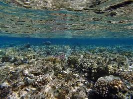 geweldig snorkelen foto