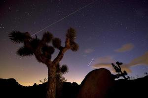 nacht in Joshua Tree National Park foto