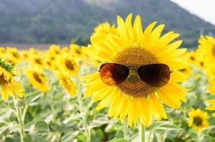 zonnebloem die zonnebril draagt foto