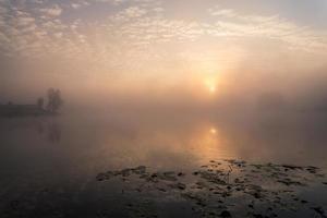 herfst hout op de oever van de rivier foto