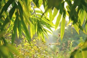 verse nieuwe groene bladeren die in zonlicht gloeien foto