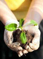 jonge plant in handen van de vrouw foto