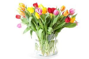 levendige gekleurde tulpen