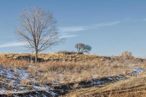 bomen bedekt met rijp foto
