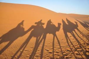kameelschaduwen in de Saharawoestijn