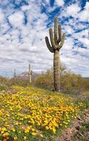 bloeiende woestijn foto