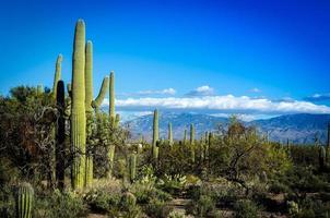 woestijnlandschap foto