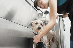 huisdierverzorging foto